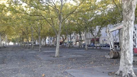 A nouveau, 16 platanes abattus place de Verdun