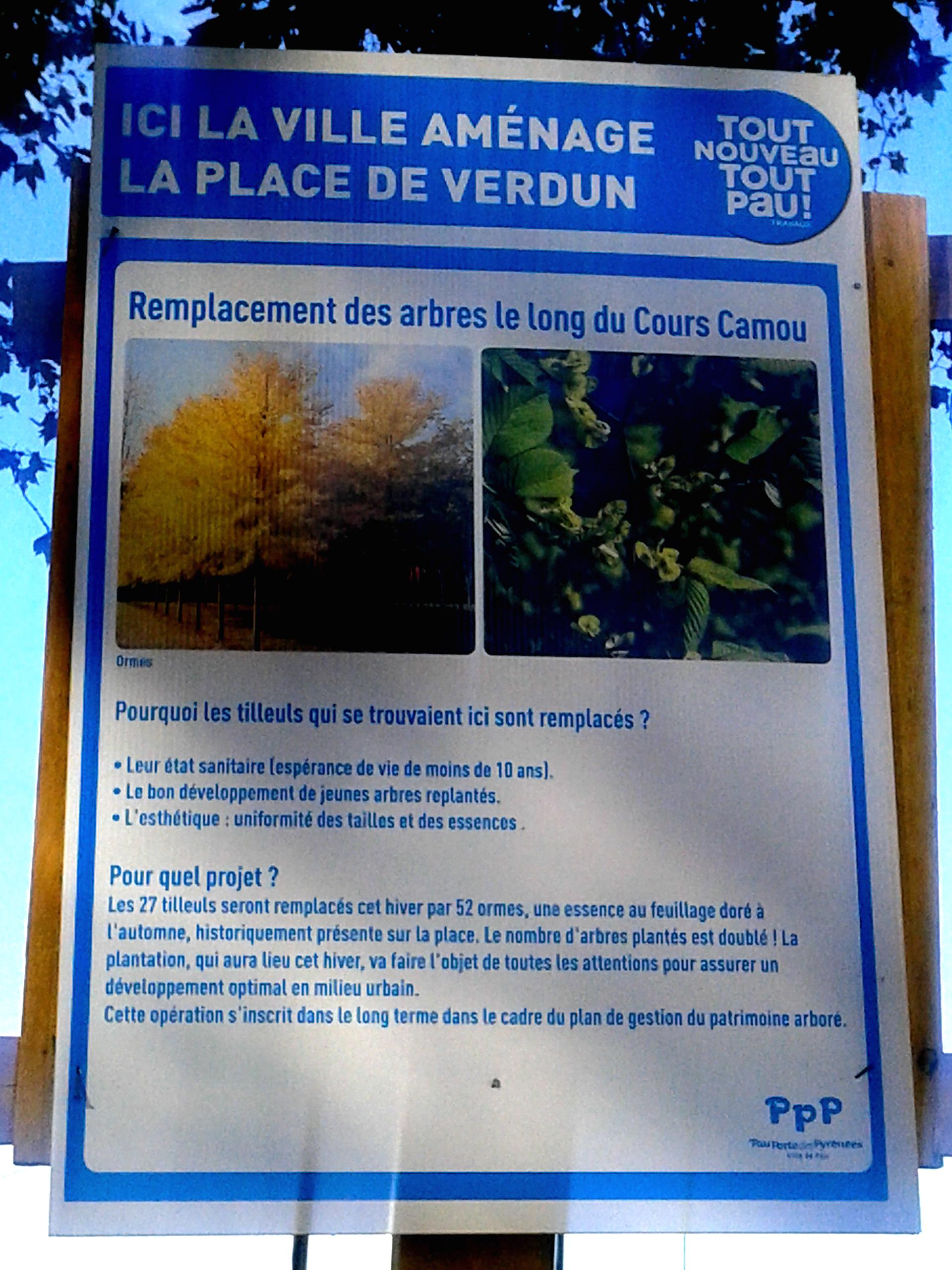 De nouveaux arbres pour la place de Verdun